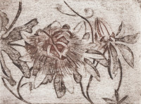 Passiflora, engraving on cardboard, 2019